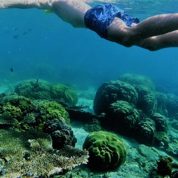 Flo-Bro | Wastewater Kills Coral