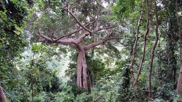 Flo-Bro in jungle Cambodia